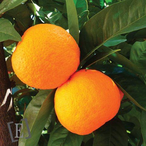 HE d'Orange